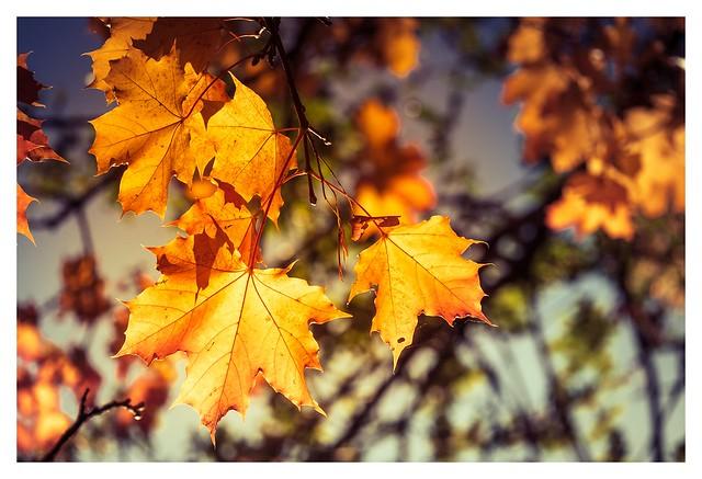 Golden Autumn Colors