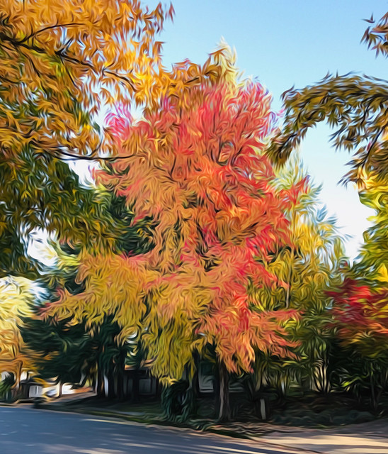 Fall colors of huge Maple tree on nearby street (edited)