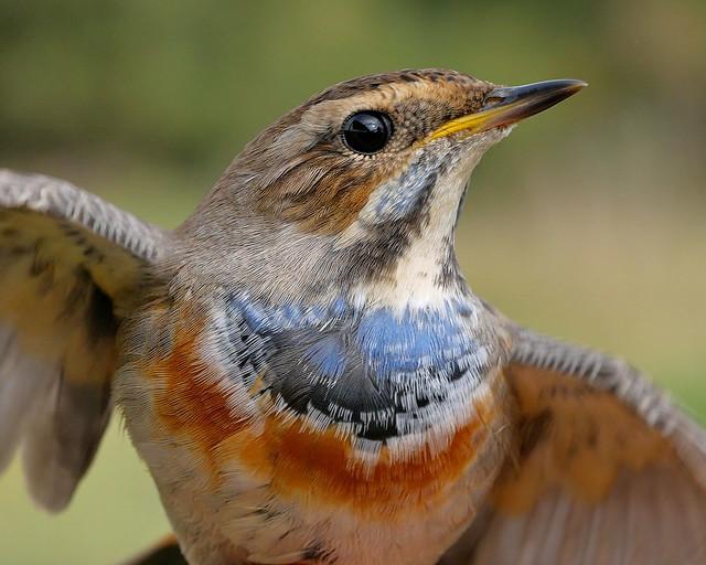 Día-de-las-Aves-10