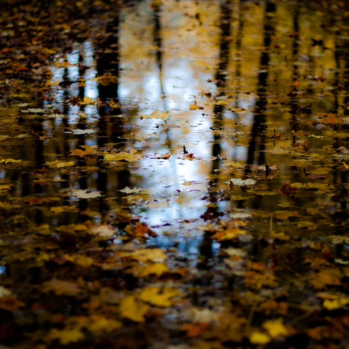 d5000 dof nikon ryersonwoodsforestpreserve abstract autumn blur depthoffield forest landscape leaves natural noahbw puddle reflection square trees water woods