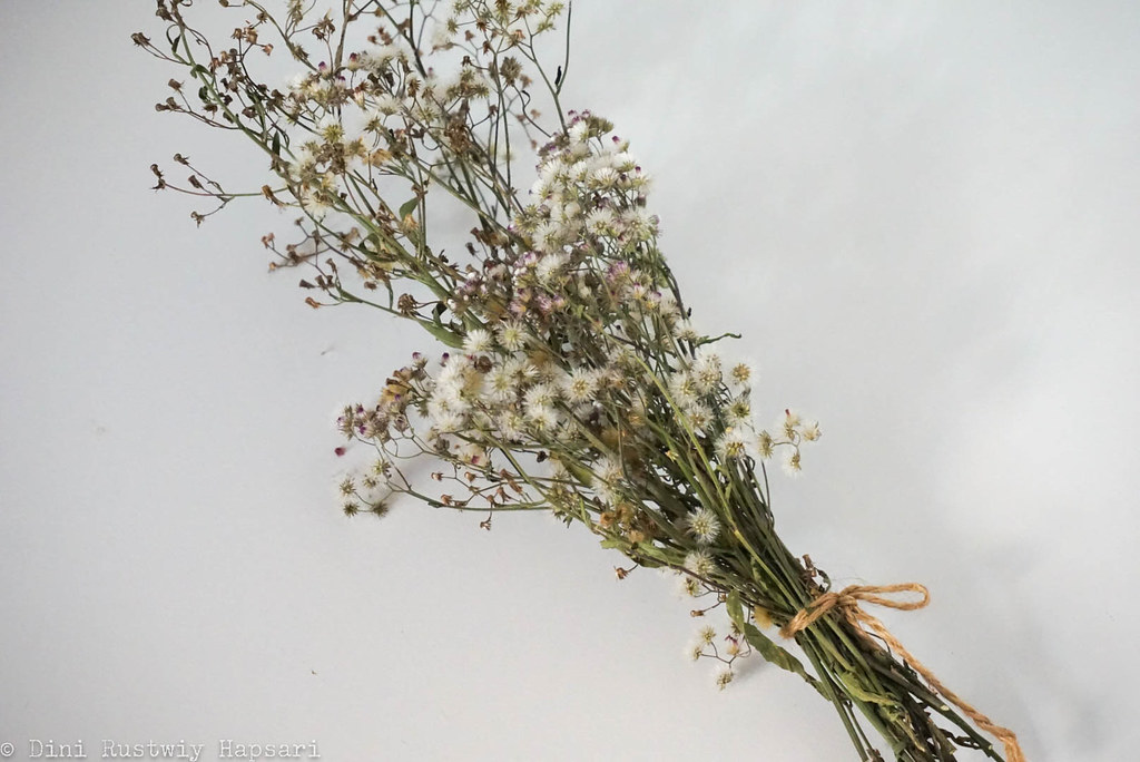 dried flower - 1