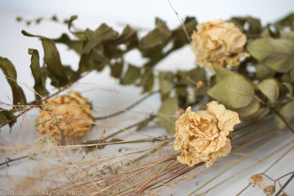 dried flower - hang 2