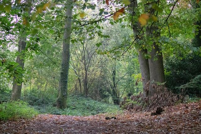 Thorncombe Woods IV