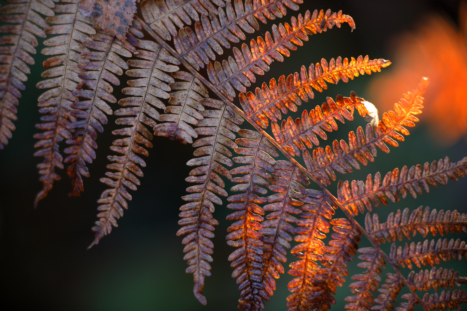 Ferns in autumn decay