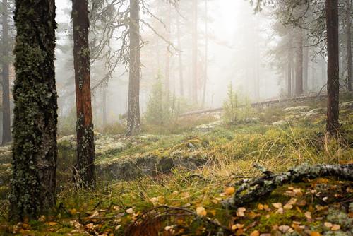 suomi finland kanavuori mountain landscape forest autumn fall syksy leafs trees haze mist fog rain nikon d750 tamron 2470mm outdoor hike view amazing europe jyväskylä vaajakoski