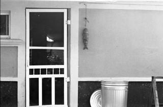 Kitchen Exit, Fish Trash