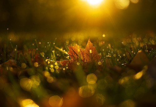 thursday fall life love nature landscape peaceful autumn foliage canon 2019 leaf fallen morning dawn bokeh macro 50mm
