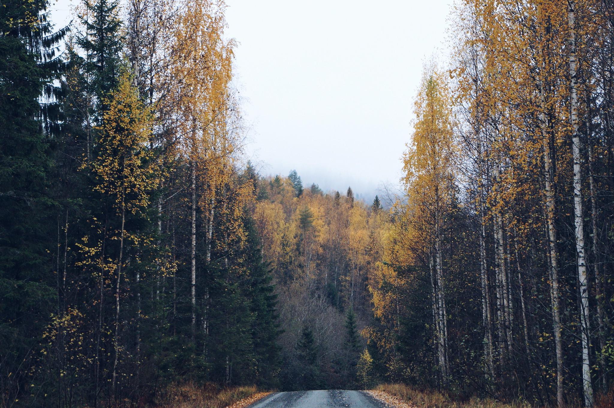 koli-syksyllä