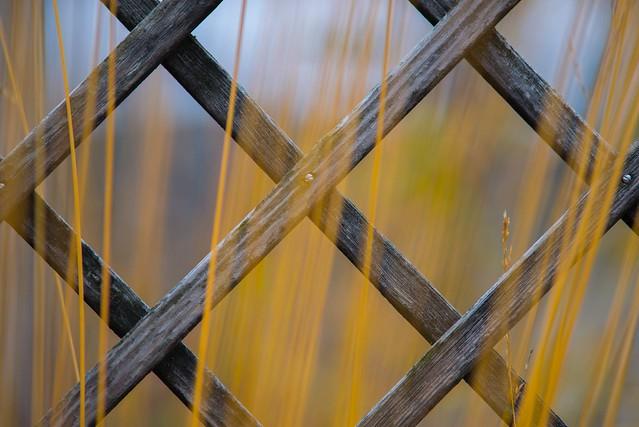 Autumn fence ...