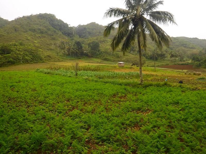 Vegetable farm