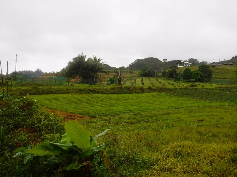 Farmlands and rooster coops