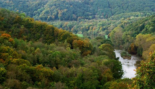 Autumnal Woodland - River Wye