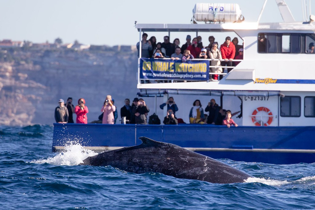 Whale Watching Sidney