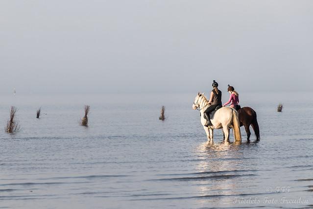 Das Glück liegt auf den Rücken der Pferde