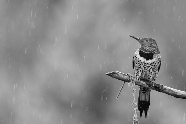 Sonoma! Wish I could send you rain