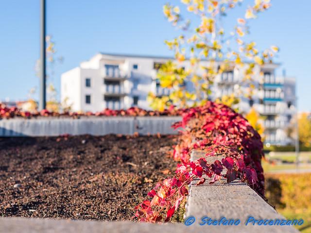 Couleurs d'automne à Villars-sur-Glâne