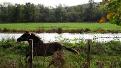 Semi-Wild horse ;-)