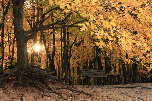 outdoors kmsmith mapletree bench toledometroparks oakopeningspreserve ohio ruralohio autumn sun sunrise lucascounty