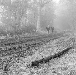 A walk in the mud,mist and frost