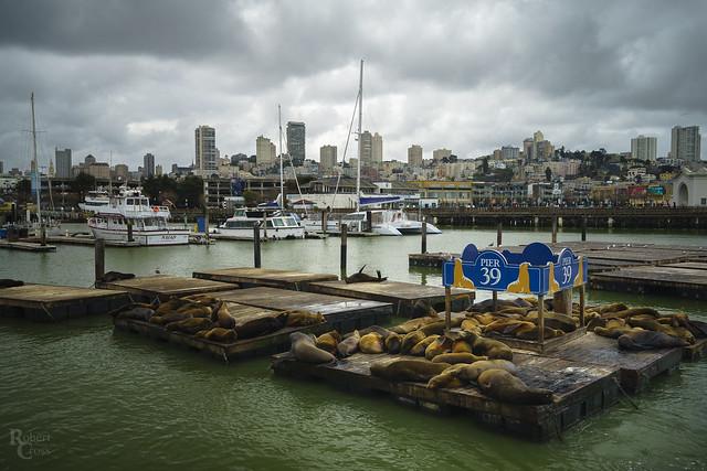 Sea Lions and San Francisco Skies