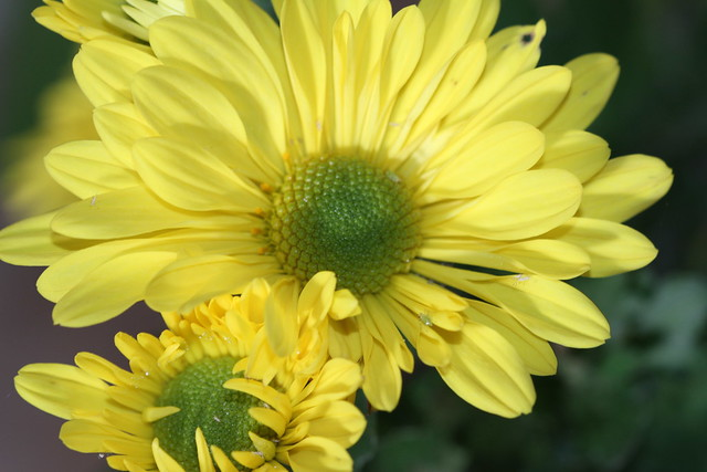 Yellow Fall Flowers