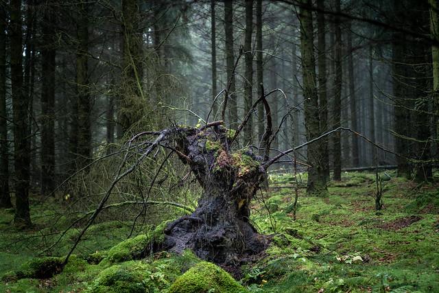 Woodland Scarecrow