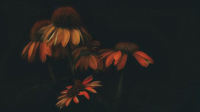 Autumn in Bloom