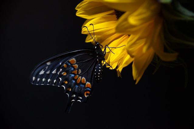 A Butterfly Is Born - DSC_4245-1