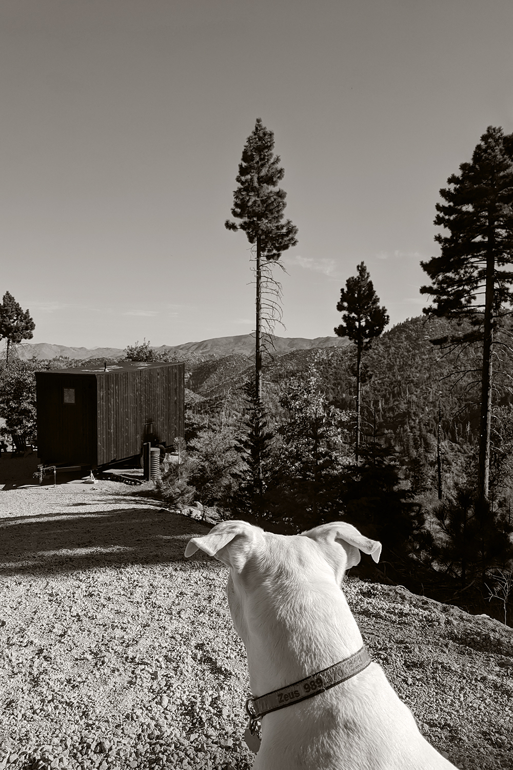 09getaway-bigbear-cabin-glamping-outdoor-dogs-travel