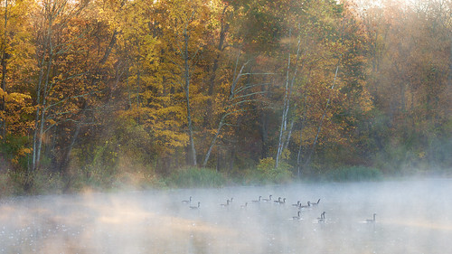 mist color bird water leaves fog forest geese pond fuji foliage xf90 xt20 trees light sun landscape connecticut granby darktable xf90mmf2 xf90mm