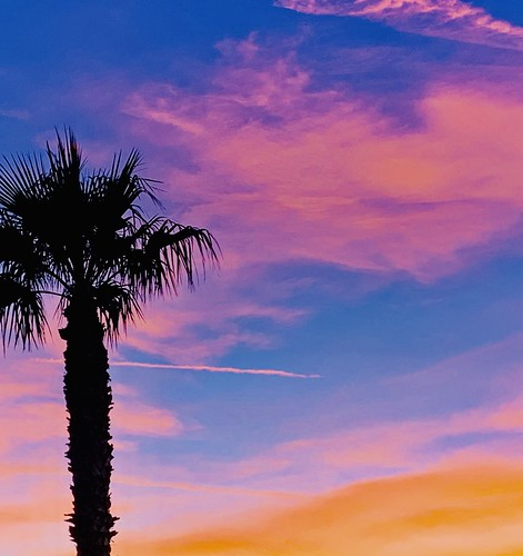usa nevada sky tree palm desert mojave america sunset iphone