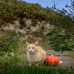 Me & My Pumpkin ♥