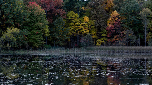 Just-before-sunset fall colors at Asylum Lake Preserve.