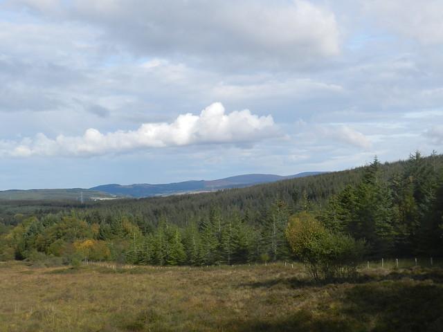 Forestry near Dunlichity, Highlands, Sep 2019