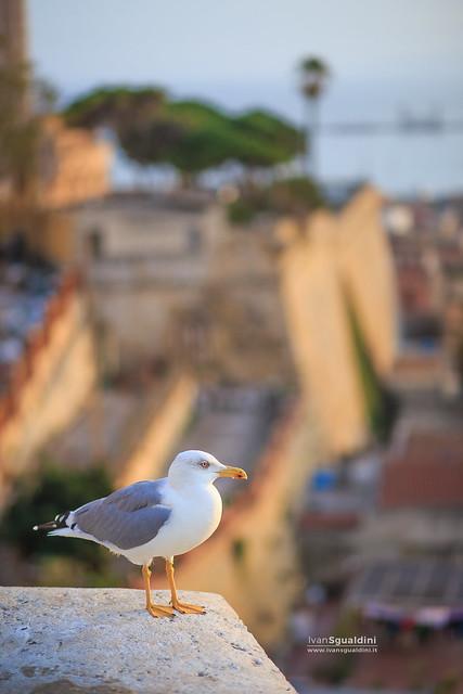 Cagliari_Castello_191183