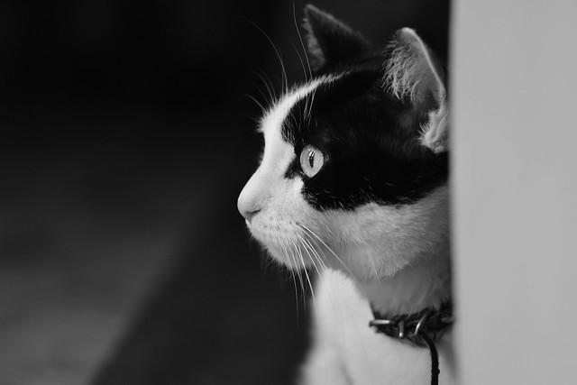 Amo a los gatos. Es el único animal capaz de tratar al ser humano como se merece : con desprecio.🐱
