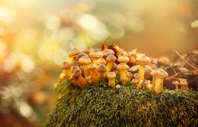 under the warm autumn sun ...