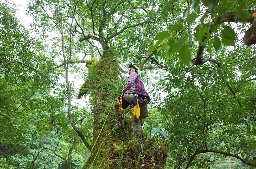 我在樹冠層生態系裡假裝是一份子(羅教練攝影)