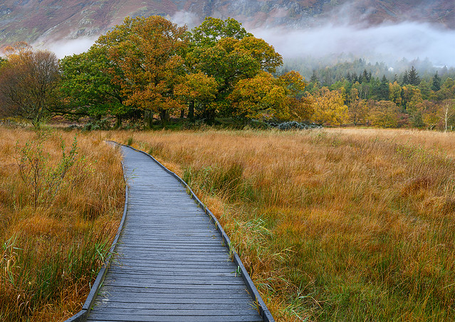 Really like the contrast between the cool boardwalk and golden autumnal colours in this one. Taken at the southern end of Derwentwater.