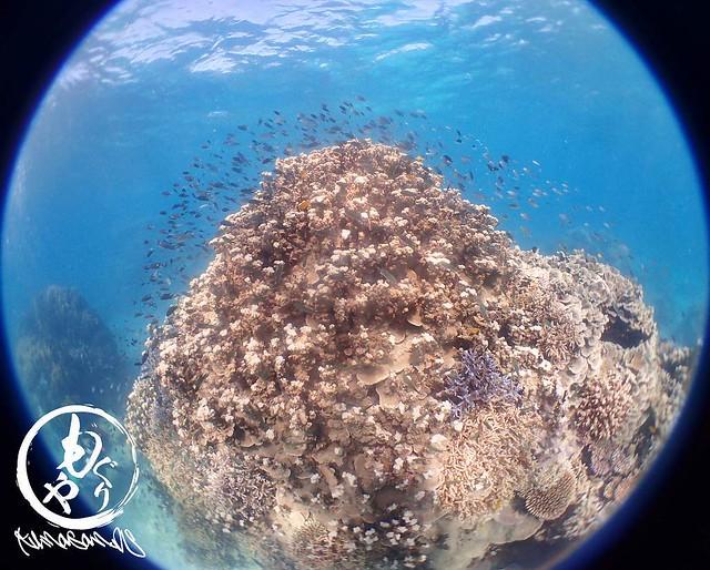 珊瑚&お魚天国☆
