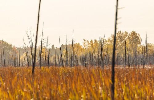 ottawa travel nature swamp bog landscape trees grass orange canada scenery ontario misty morning mist sunny