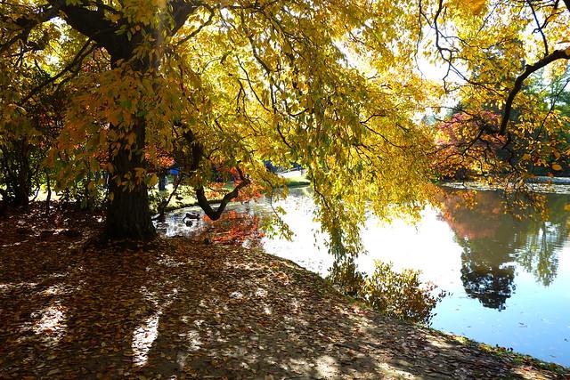 Sussex Autumn  Trees