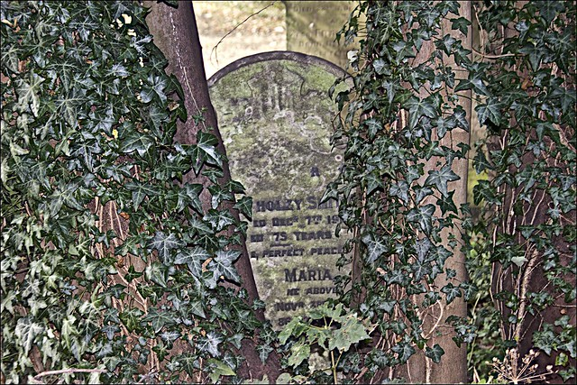 Walk Hull General Cemetery 22 Sept 2019
