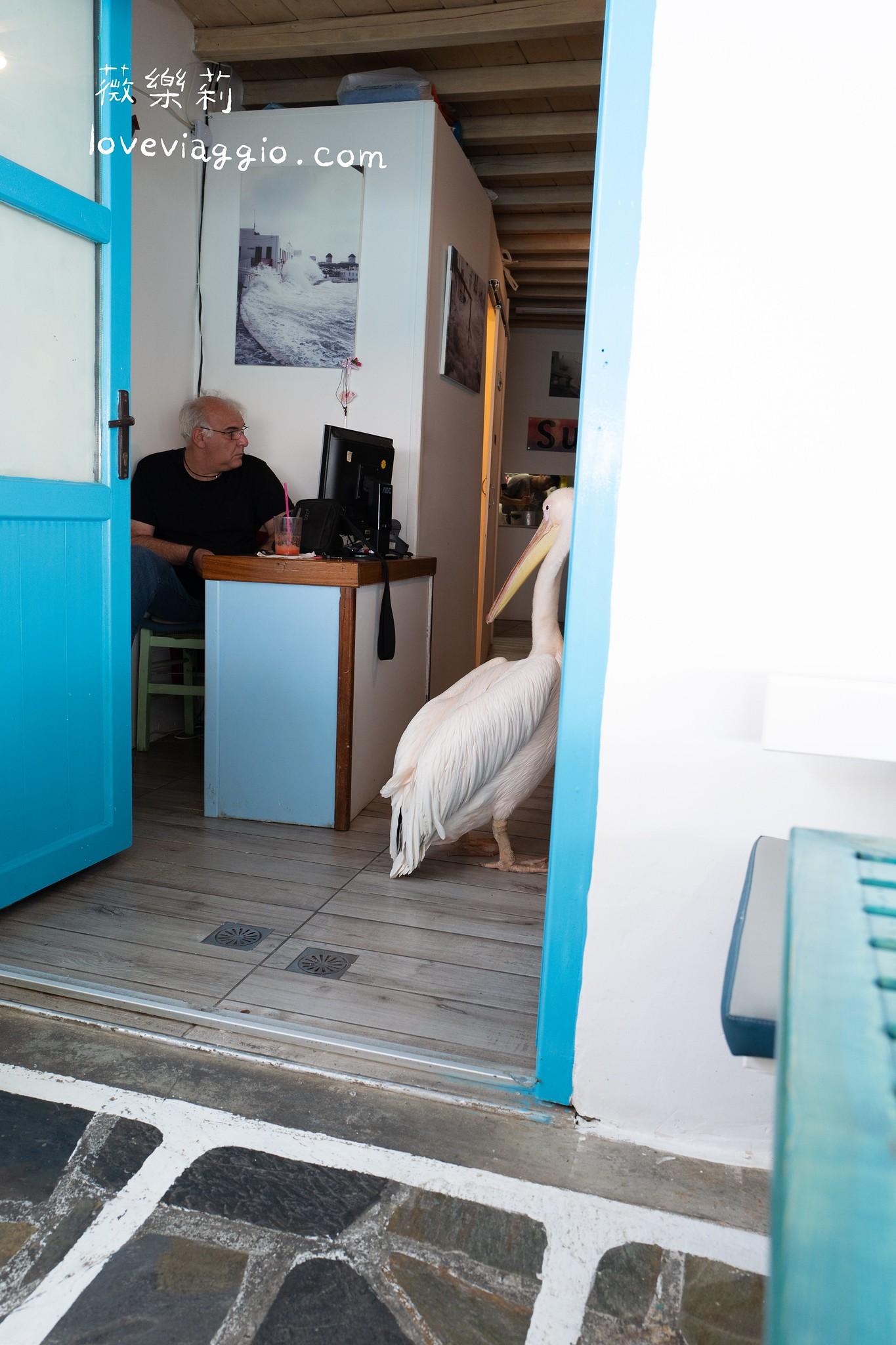 【希臘米克諾斯Mykonos】小威尼斯海景 鵜鶘與卡托米利風車 @薇樂莉 Love Viaggio | 旅行.生活.攝影