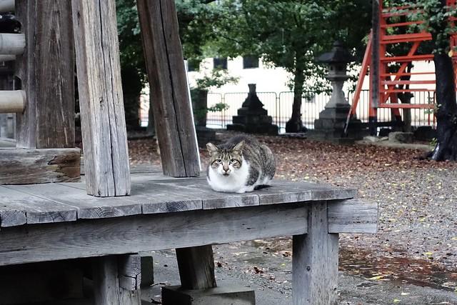 Today's Cat@2019-10-24
