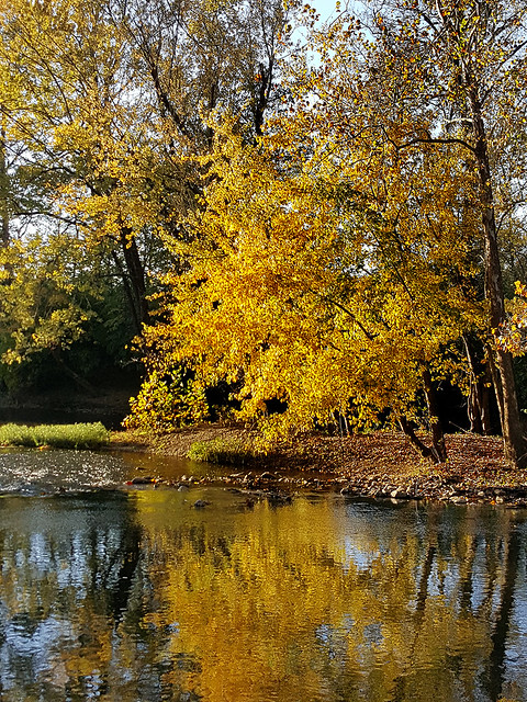 20191023_yellow leaves by river2