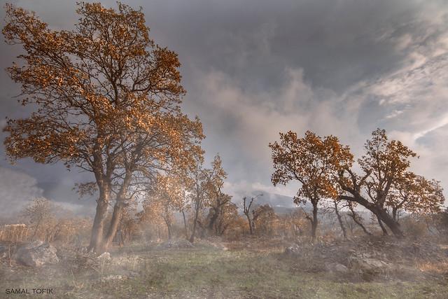 Sunrise on wilderness