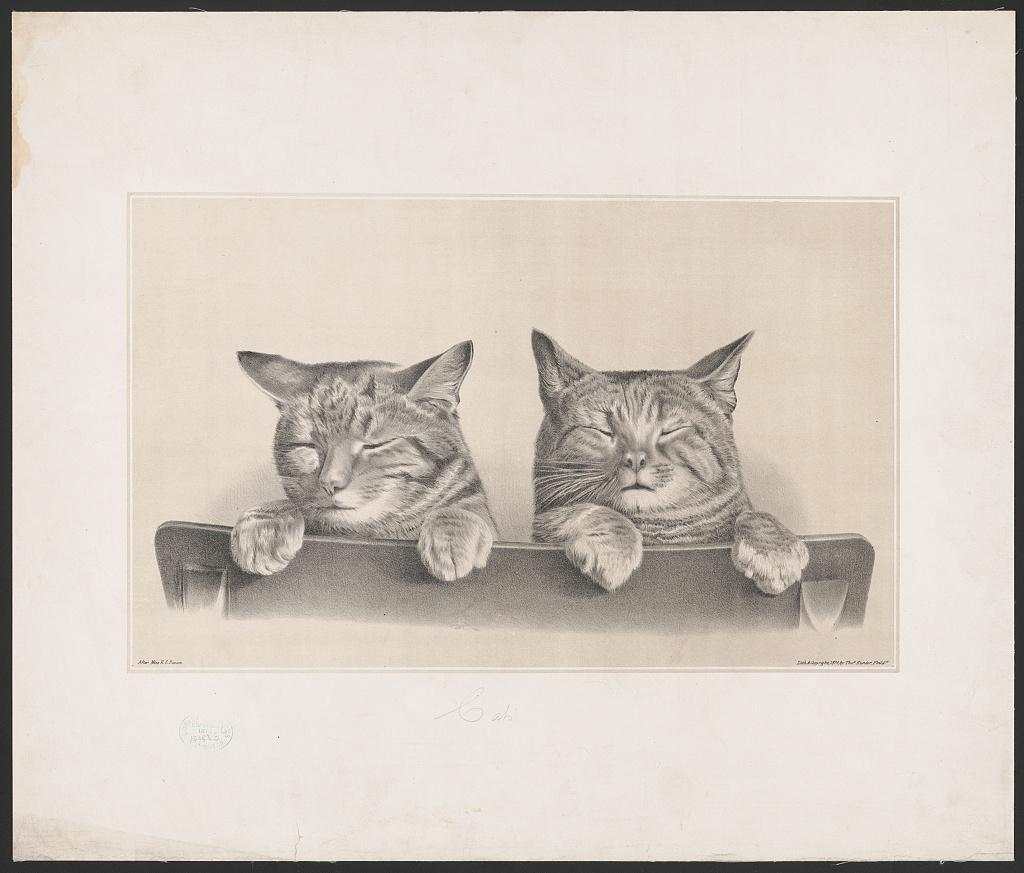 Cats (LOC)