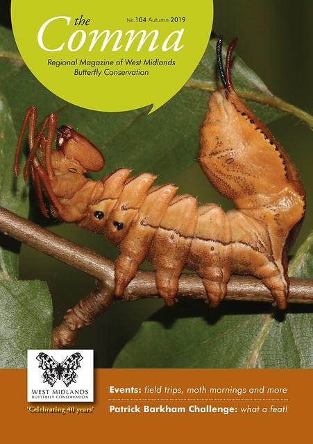 Lobster Moth - Stauropus fagi larva
