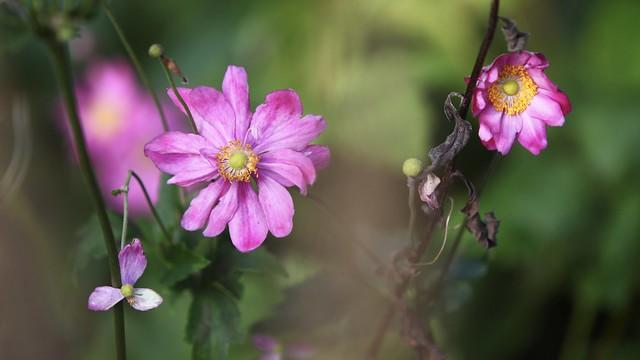 flowers in autumn